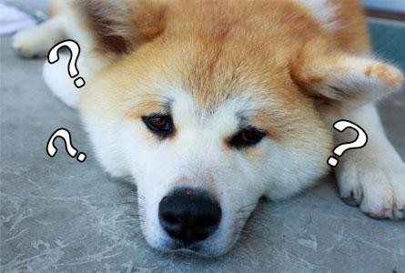 何故ドッグフードに使われているの?
