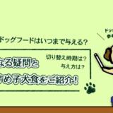 子犬用のドッグフードはいつまで与える?気になる疑問とおすすめ子犬食をご紹介!