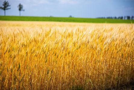 必要な雑穀を厳選配合
