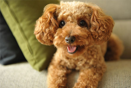 犬が下痢をする原因は12個もの要因がある
