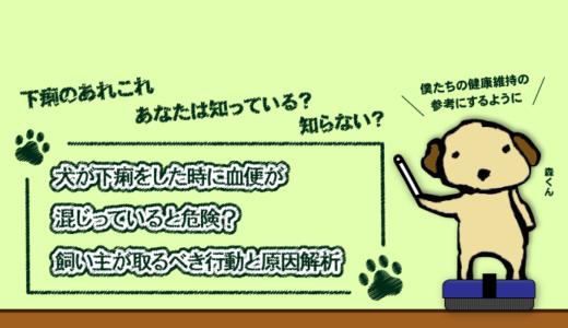 犬が下痢をした時に血便が混じっていると危険?飼い主が取るべき行動と原因解析