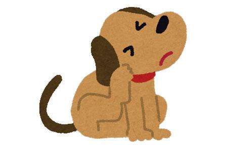 犬のよだれやけはどうして起こる?どうして茶色くなるの?