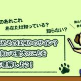犬が舐めるのは何かのサイン?理由を知って愛犬のことをもっと理解しよう!