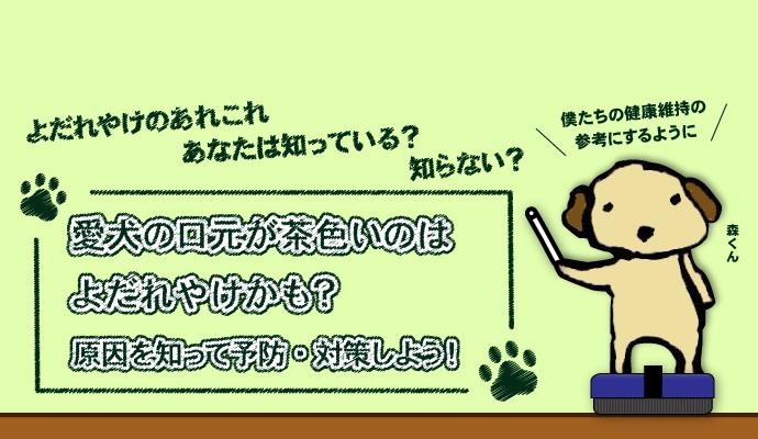 愛犬の口元が茶色いのはよだれやけかも?原因を知って予防・対策しよう!