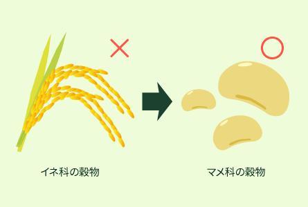 穀物(イネ科とマメ科)