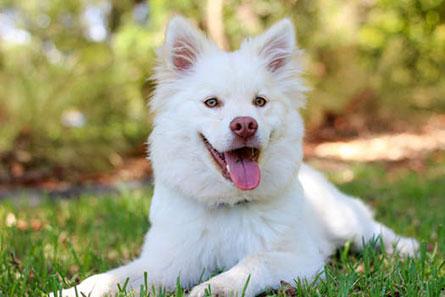 ブロッコリーを食べた犬に期待できる効果