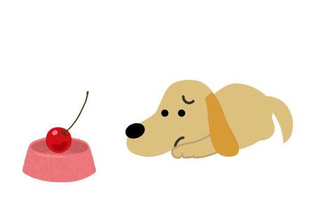 犬がさくらんぼを食べてはいけない一番の理由は青酸性物質のせい!