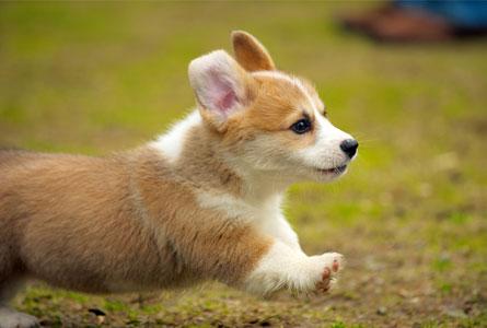 にんじんを食べた犬に期待できる効果