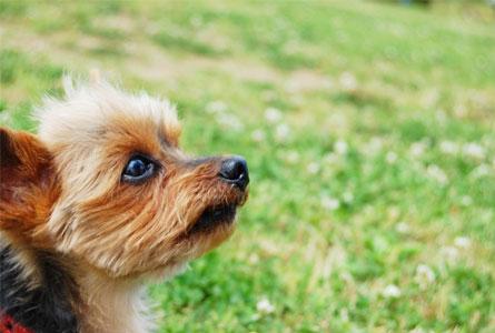 キウイを食べた犬に期待できる効果