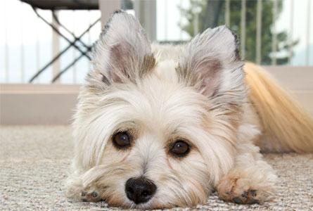 家の愛犬が老犬になってきた場合の対策