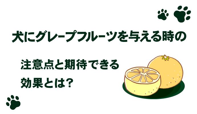 犬にグレープフルーツを与える時の注意点と期待できる効果とは?