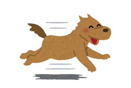 ピーマンを食べた犬に期待できる効果