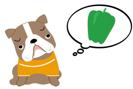 愛犬にピーマンを与える時の注意点