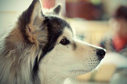 愛犬が長ネギを食べてしまった時の症状