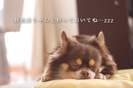 愛犬が長ネギを食べてしまった時の対処法
