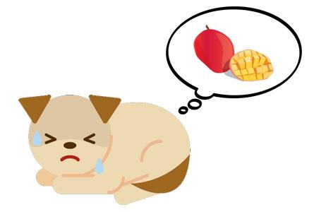 愛犬にマンゴーを与える時の注意点