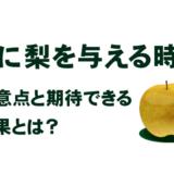 犬に梨を与える時の注意点と期待できる効果とは?