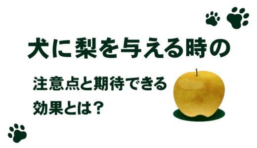 犬に梨を与える時の期待できる効果と注意点とは?