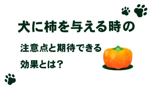 犬に柿を与える時の注意点と期待できる効果とは?