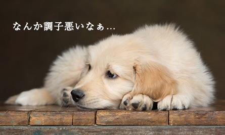 愛犬がプルーンを食べてしまった時の症状