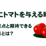 犬にトマトを与える時に注意点と期待できる効果とは?