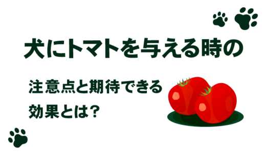 犬にトマトを与える時の注意点と期待できる効果とは?