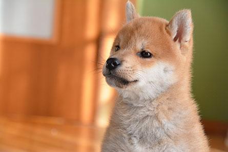 愛犬にじゃがいもを与える時の注意点