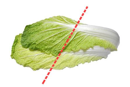 与える白菜の量は一枚の1/2をちぎって与えましょう